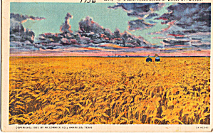 West Texas Ocean of Wheat (Image1)