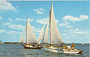 Racing Sloops along Maine Coast p28164 (Image1)