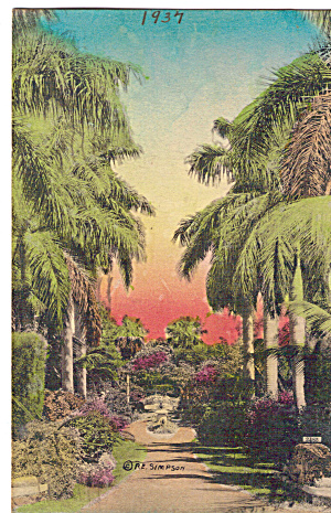 Royal Palms, Hand Colored Postcard