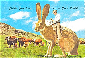Cattle Punching on a Rabbit Postcard (Image1)