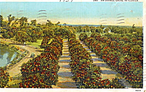 An Orange Grove in Florida p28303 (Image1)