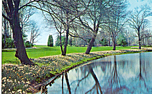 Daffodils Border the Lake Longwood Gardens p28447 (Image1)