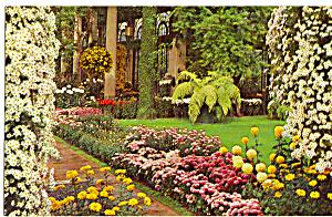 Chrysanthemums Frame Longwood Gardens PA p28473 (Image1)