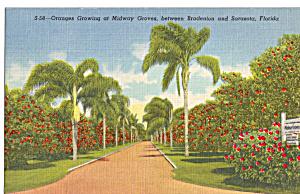 Orange Grove  at Midway Groves Bradenton Florida p28511 (Image1)