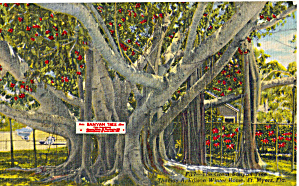 Banyan Tree Edison Winter Home Ft Myers FL p28513 (Image1)