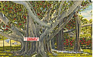 Banyan Tree Edison Winter Home Ft Myers FL p28513 (Image1)