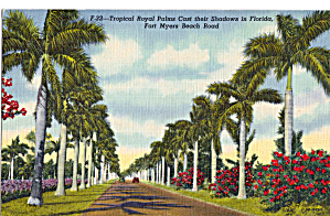 Royal Palms Ft Myers Beach Road Florida P28524
