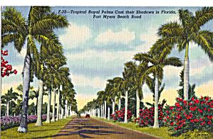 Royal Palms Ft Myers Beach Road Florida p28524 (Image1)