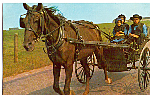 Amish Family With Horse Drawn Two Wheel Buggy P28584
