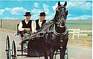 Amish Men With Horse Drawn Courting Buggy P28585