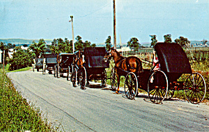 Mennonite Families With Horse Drawn Open Buggy P28590