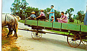 Amish Girls Driving The Farm Wagon Postcard P28653