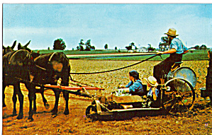 Amish Family Prepares The Tobacco Planter P28654