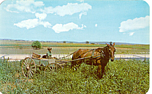 Young Amish Boy Driving A One Horse Farm Wagon P28717