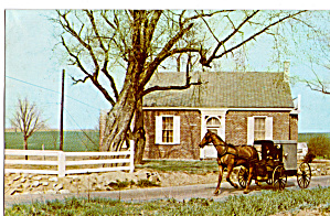Amish Buggy Postcard p28723 (Image1)