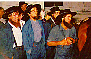 Amish Men at Horse Auction p28731 (Image1)