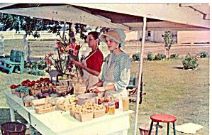 Amish Roadside Produce Stand Postcard p28741 (Image1)
