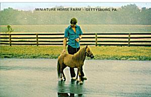 Miniature Horse Farm, Gettysburg (Image1)