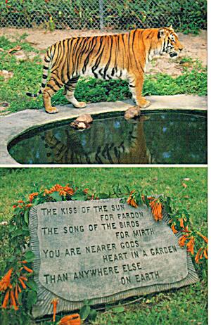 Jungle Larry s African Safari Park Naples Florida p28921 (Image1)