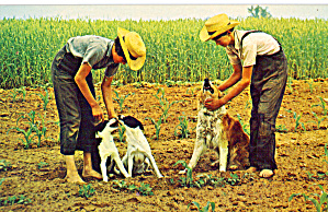Amish boys and their Pet Dogs p28978 (Image1)