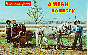 Amish Children with Pony Cart p28984 (Image1)