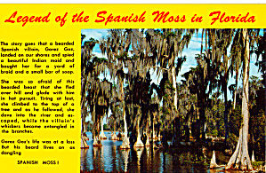 Legend of the Spanish Moss in Florida (Image1)