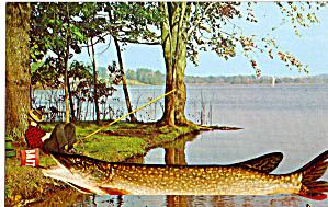 Large Fish Taking Bait Bucket p29034 (Image1)