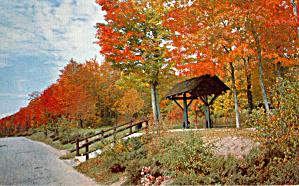 Tis Autumn Foliage Scene p29093 (Image1)