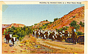 Rounding Up Cattle West Texas Range (Image1)