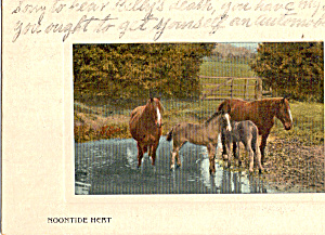 Horses Standing in Pond, Noontide Heat 1908 (Image1)