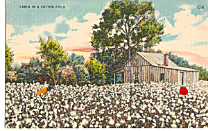 Cabin In A Cotton Field Postcard P29346