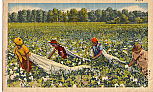 Workers In A Cotton Field Postcard P29347