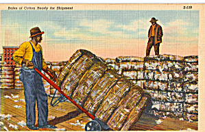 Bales of Cotton Ready for Shipment Postcard p29349 (Image1)