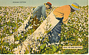 Picking Cotton, Texas The Lone Star State (Image1)