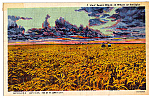 West Texas Ocean of Wheat at Twilight Postcard p29371 (Image1)