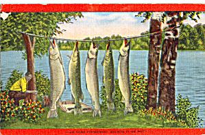 Exaggerated Catch of Fish p29396 (Image1)