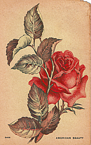 An American Beauty Rose 1912 Postcard (Image1)