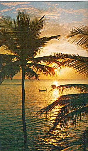 A Florida Sunset Postcard p29773 (Image1)