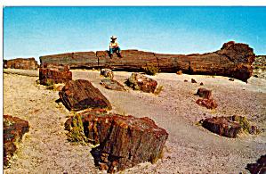 Pettrified  Forest Near Holbrook Arizona p29780 (Image1)