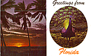 Florida Sunset And Peacock Postcard Scenes P29933
