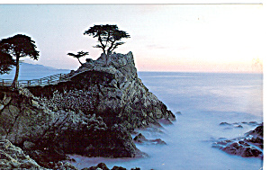 The Lone Cypress Pebble Beach Ca P29957