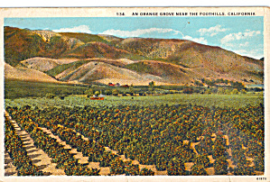 Orange Groves and Foothills California p29976 (Image1)