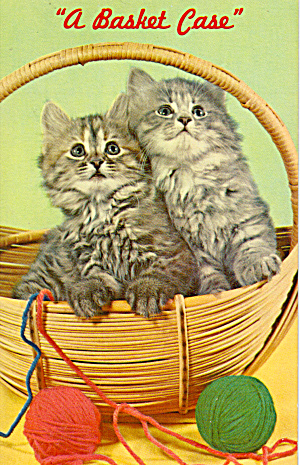 Pair Of Kittens In A Basket Postcard P30056
