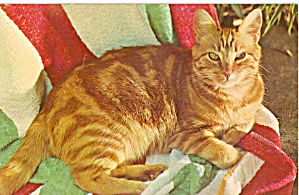 Orange Tabby Cat Postcard p30059 (Image1)