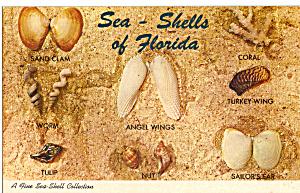 Florida Shells 8 Shells Shown Named Postcard p30145 (Image1)