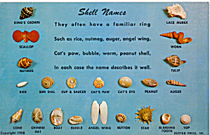 Florida Shells Shell Names Postcard P30146