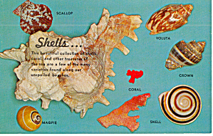 Florida Shells 7 Shells Shown and Named p30149 (Image1)
