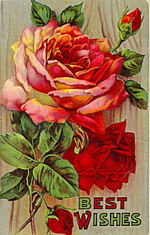 Rose Bouquet, Best Wishes Postcard p30328 (Image1)