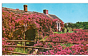 Famous Rose Cottage Chatham Cape Cod Ma P30388