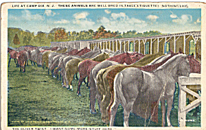 Horses Feeding at Camp Dix, NJ (Image1)